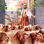 Le pecore di due ovili